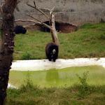 chattbir zoo bears.jpg