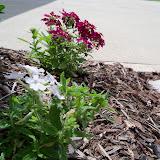 Gardening 2010, Part Two - 101_2849.JPG