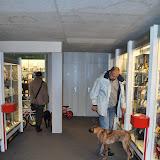 KNON-honden in Emmen - DSC_0797.JPG