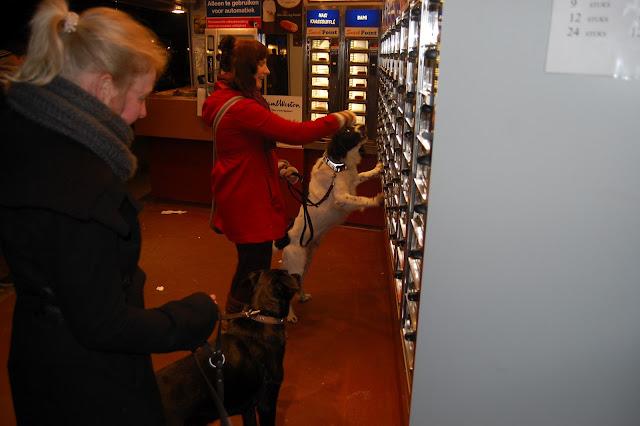 Jonge Hond centrum Emmen - 2012-04-01%2B022.JPG