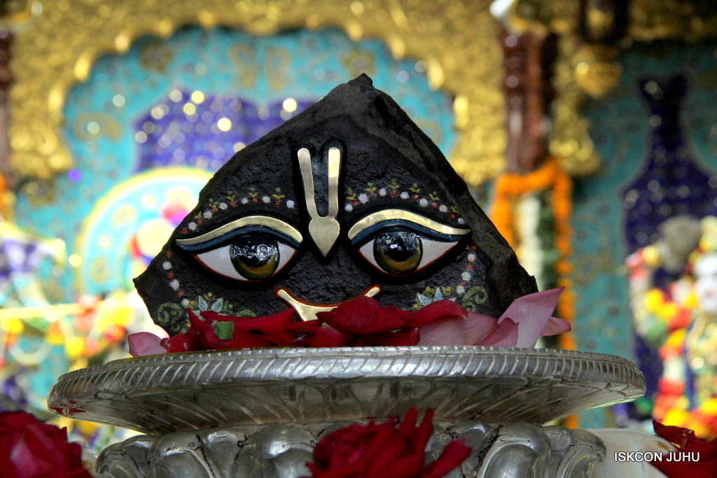 Govardhan Abhishek Darshan  At ISKCON Juhu on 31st Oct 2016 (6)