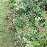 Gardening 2012 - IMG_3527.JPG