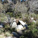 Bridge on Sawpit Creek (298565)