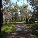 Continuing through the bush (116833)