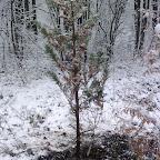 Зимняя уборка в Дендрарии 072.jpg