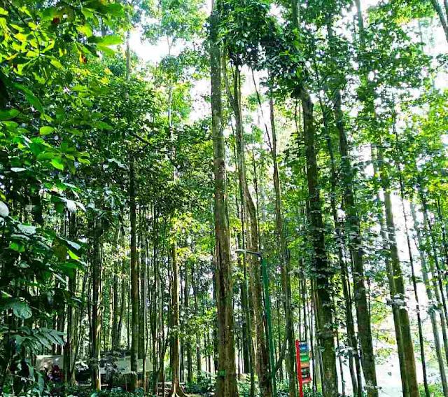 Hutan pinus taman hutan raya juanda