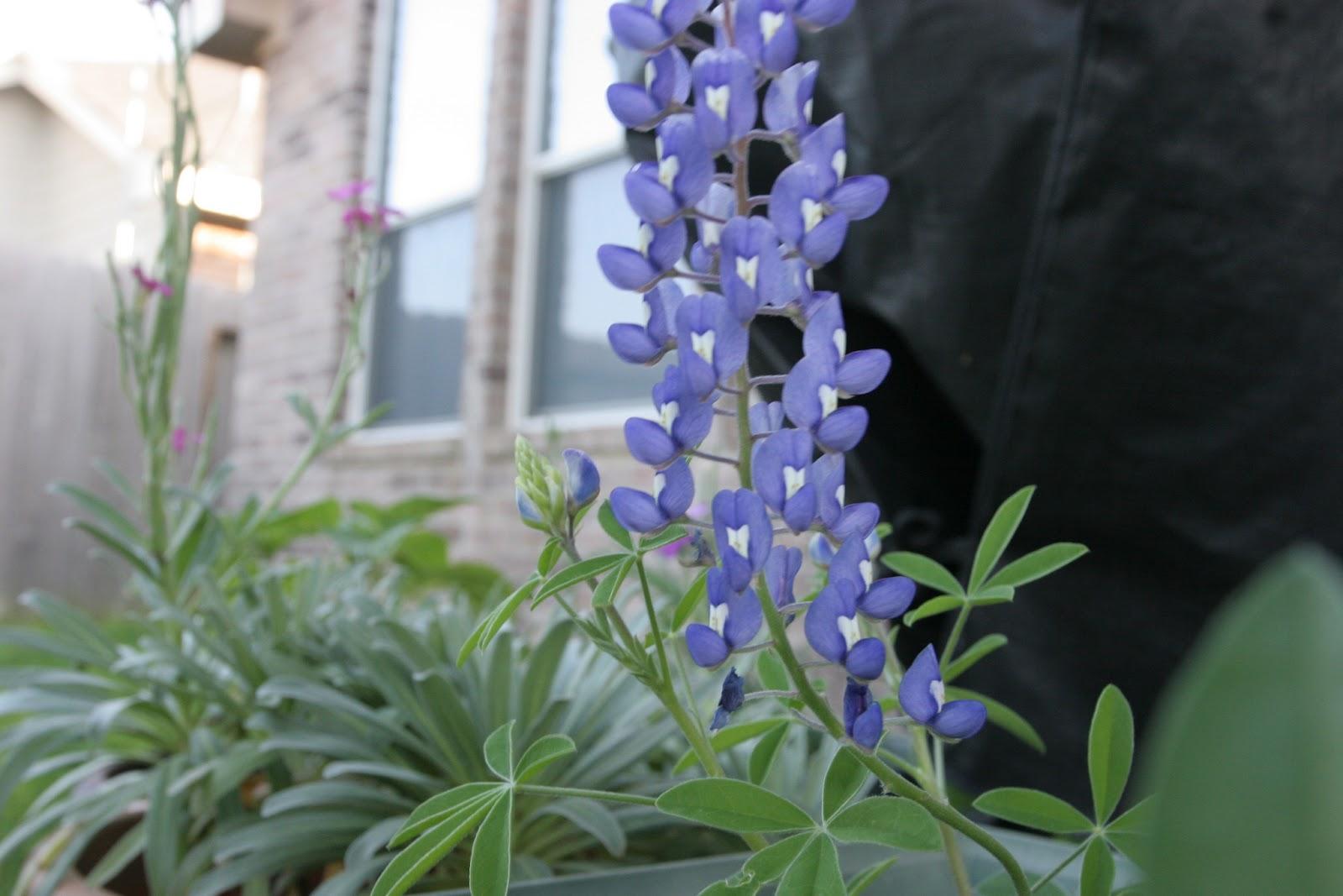 Gardening 2012 - IMG_2850.JPG