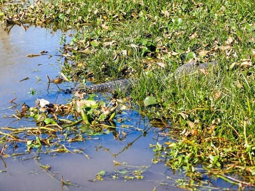 Cajun Encounters Swamp Tours New Orleans -
