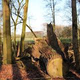 Der Baumstumpf wird der Natur überlassen
