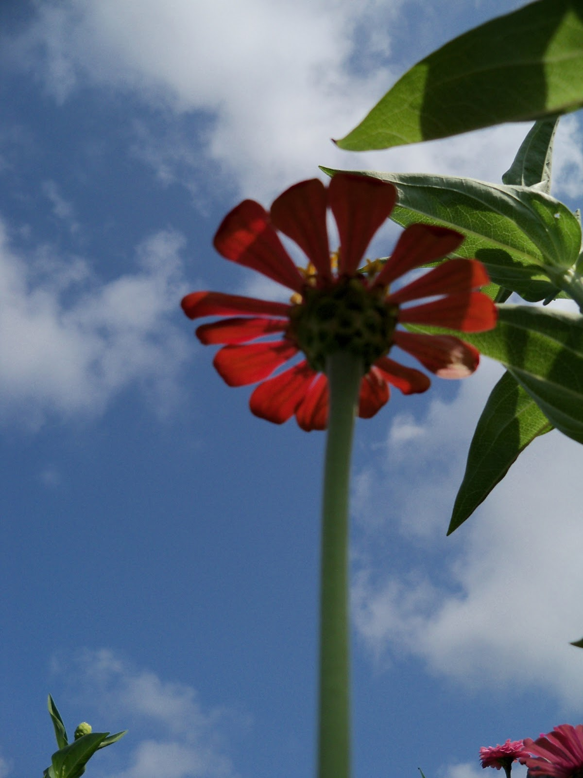 Gardening 2011 - 100_0095.JPG