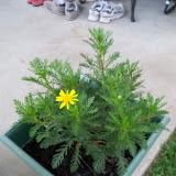 Gardening 2010, Part Two - 101_2814.JPG