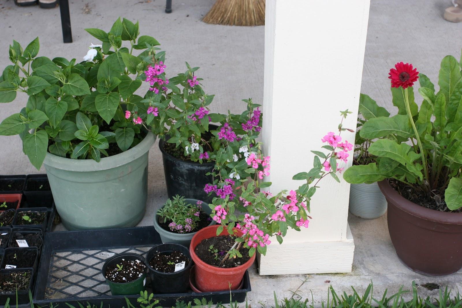 Gardening 2012 - IMG_2910.JPG