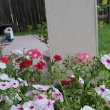 Gardening 2013 - 115_6087.JPG