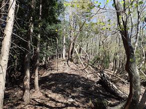 イチゴ谷山の最後は緩斜面