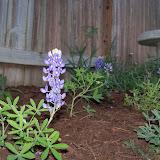 Gardening 2014 - 116_1124.JPG