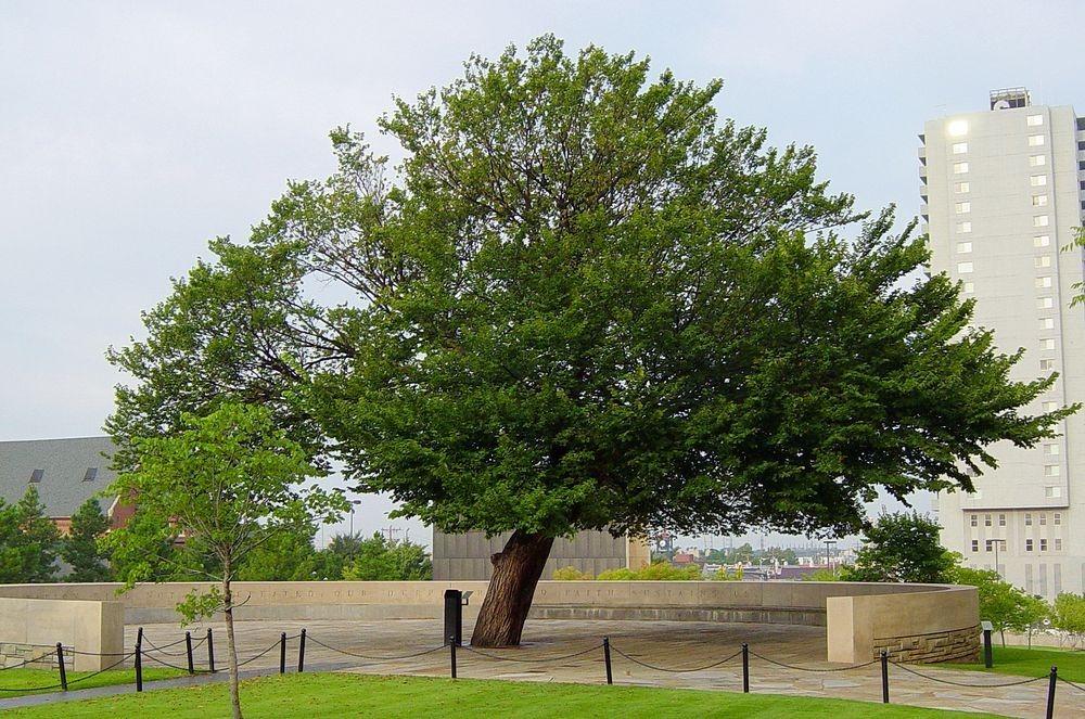 survivor-tree-oklahoma-1