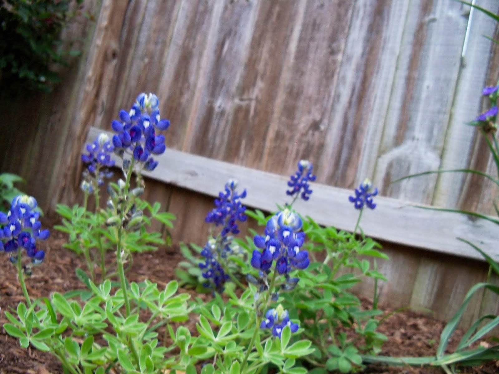 Gardening 2014 - 116_1462.JPG