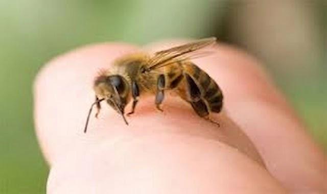النحل,لسعات النحل,فوائد,فوائد لسعة النحل,لسع النحل,سم النحل,علاج,العسل,عسل النحل,فوائد لسعة النحل للمفاصل,لسعة النحل,لسعة النحلة,علاج لسعات النحل,كيف تعالج لسعة النحل,علاج تورم لسعة النحل,لدغة النحل,لسعة,العلاج بسم النحل