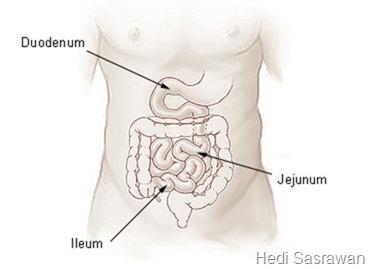 Bagian-bagian usus halus dan fungsinya