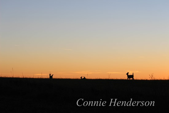November Sunset deer Nov 7