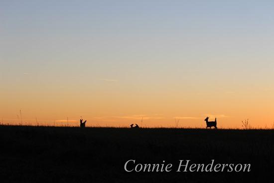 November Sunset deer Nov 7