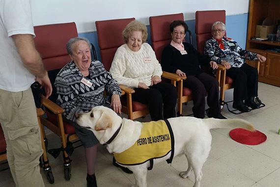 Las terapias asistidas por animales se incorporan a las Residencias de Mayores