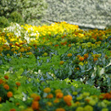 10-26-14 Dallas Arboretum - _IGP4265.JPG