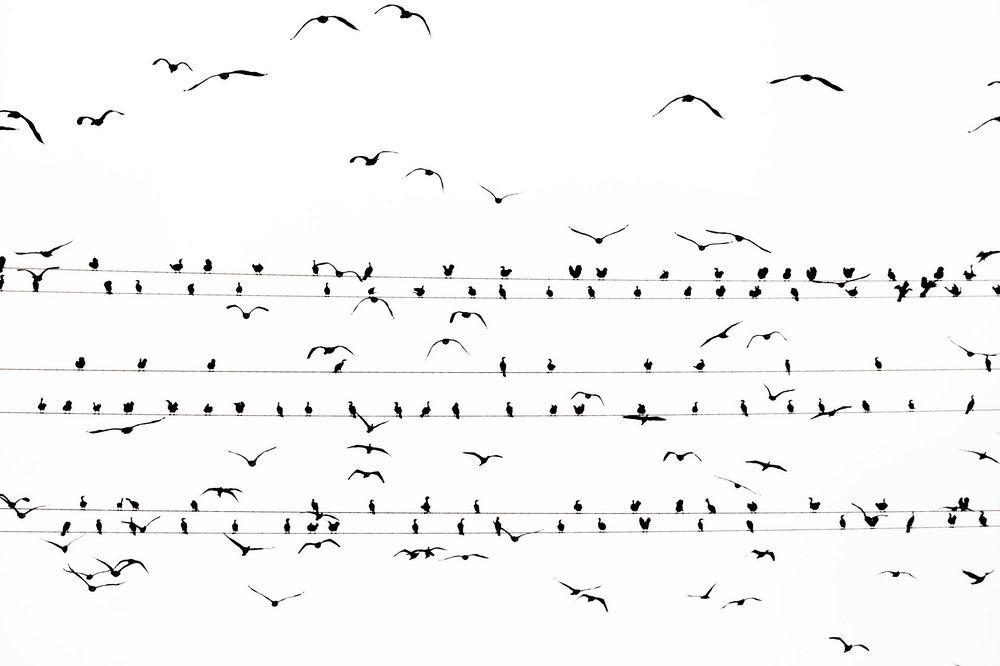 yoshinori-mizutani-tokyo-cormorant-1