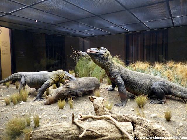 reptiles-museo.-historia-natural-nueva-york.JPG