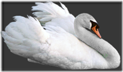 cisnes-buscoimagenes-14_thumb