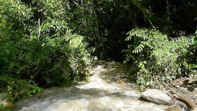 Petit rio au sud de Taipiplaya (alt. 850 m). Bolivie, 18 janvier 2008. Photo : J. F. Christensen