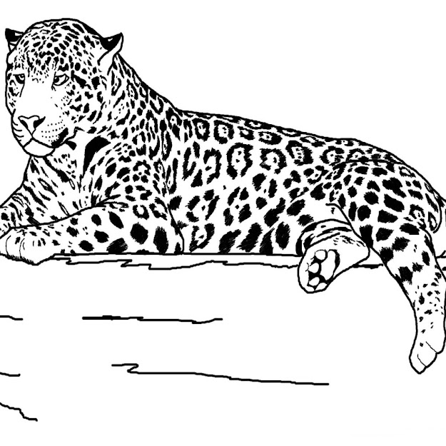 Realistic Animals Coloring Pages Printable Realistic Animals Coloring Pages  Free Realistic Animals Coloring Pages