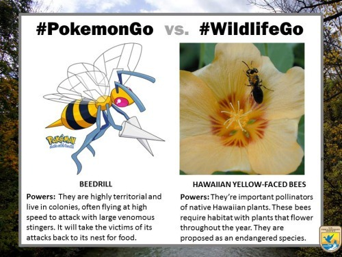 pokemongo-vs-wildlifego-2