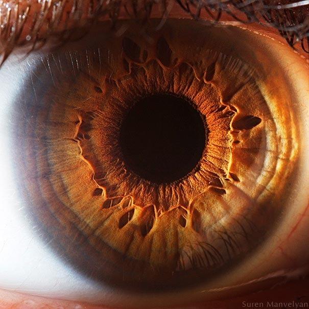 human eyes 1 (12)