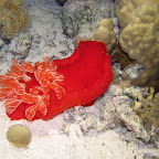 Spanish dancer