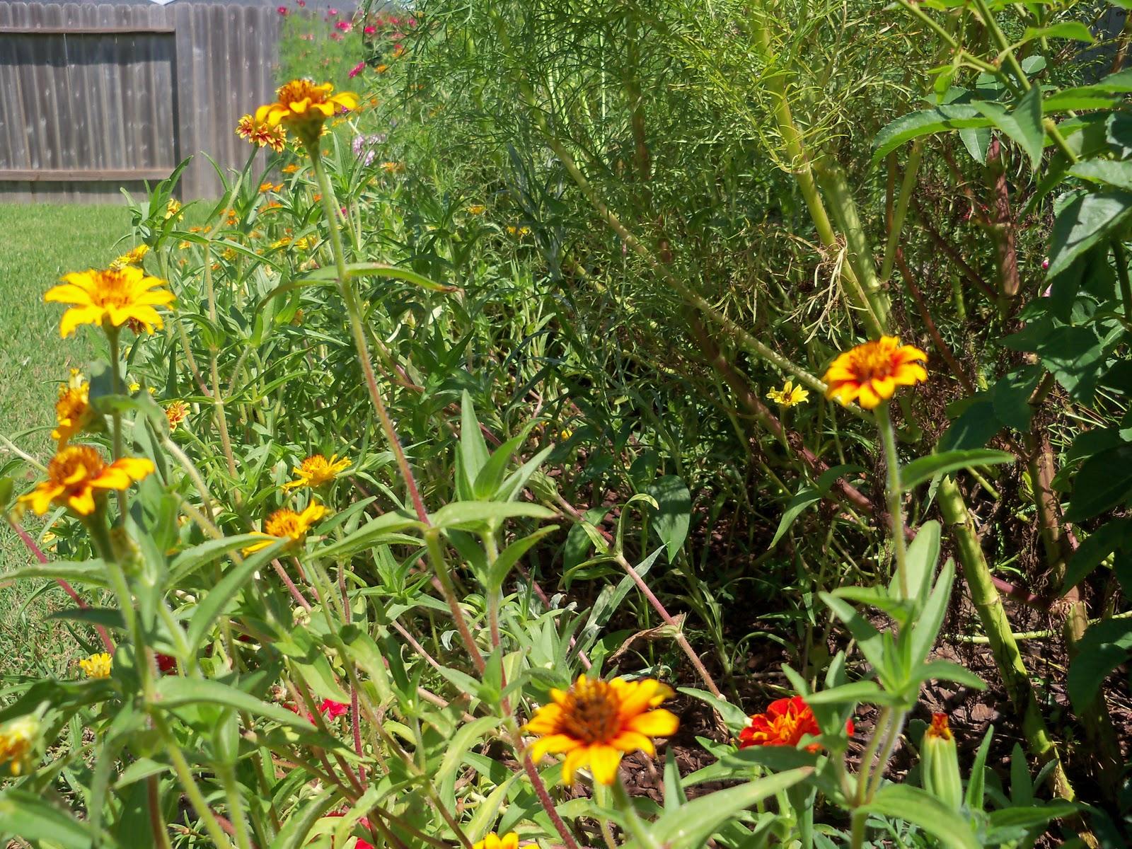 Gardening 2010, Part Three - 101_4358.JPG