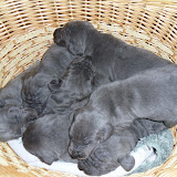 basket of blue beauties @ 2 weeks
