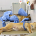 Ibram-DF abre vagas gratuitas para castração de cães e gatos em Samambaia nesta terça (29)