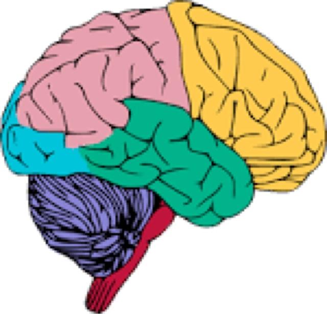 Musings Of A Pragmatic Teacher The Brain The Final Frontier