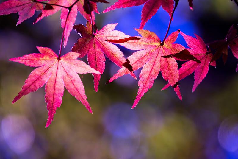 府中の森公園 紅葉 写真9