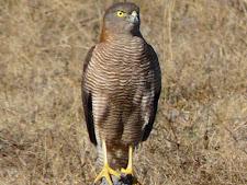 wildlife-birds-2.jpg