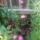 Gardening 2010, Part Two - 101_3085.JPG