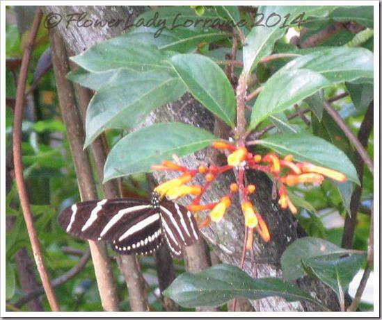 05-08-zebra