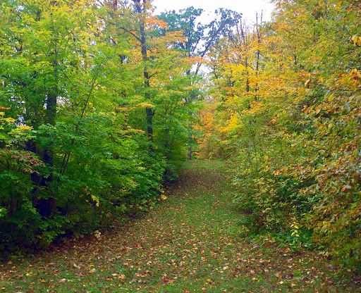 Skaters Waltz ski trail Sunday afternoon. Nice mix of green and first fall colors on the ski trail right now.