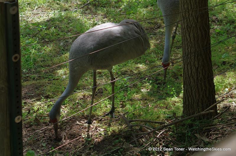 05-11-12 Wildlife Prairie State Park IL - IMGP1594.JPG