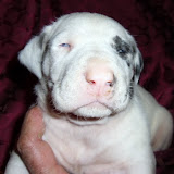 light harl/white girl @ 3 1/2 weeks