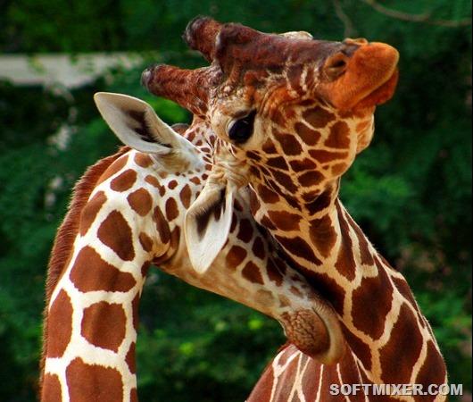 Энциклопедия сексуальной раскрепощенности в мире животных