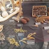 Коллекция шишек и веток хвойников