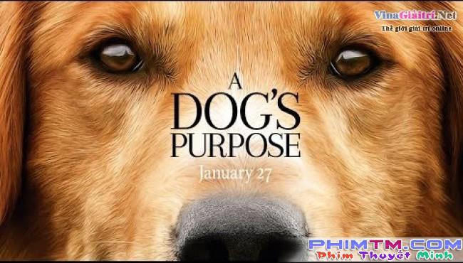 Mục Đích Sống Của Một Chú Chó - Image 3