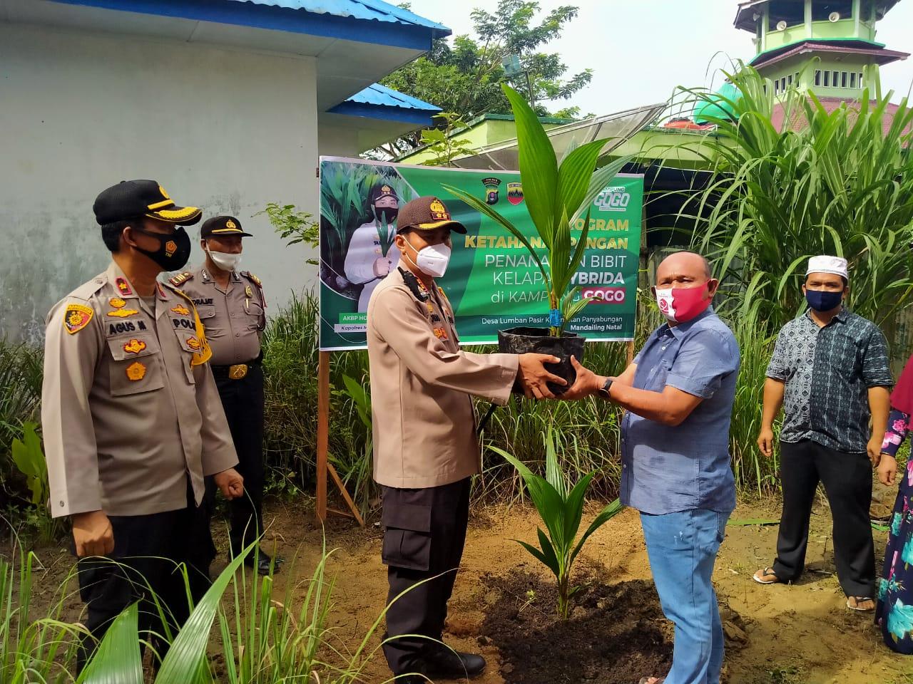 Kapolres Madina Tanam Pohon Kelapa Hybrida Dan Tabur Ikan Di Kampung Tangguh